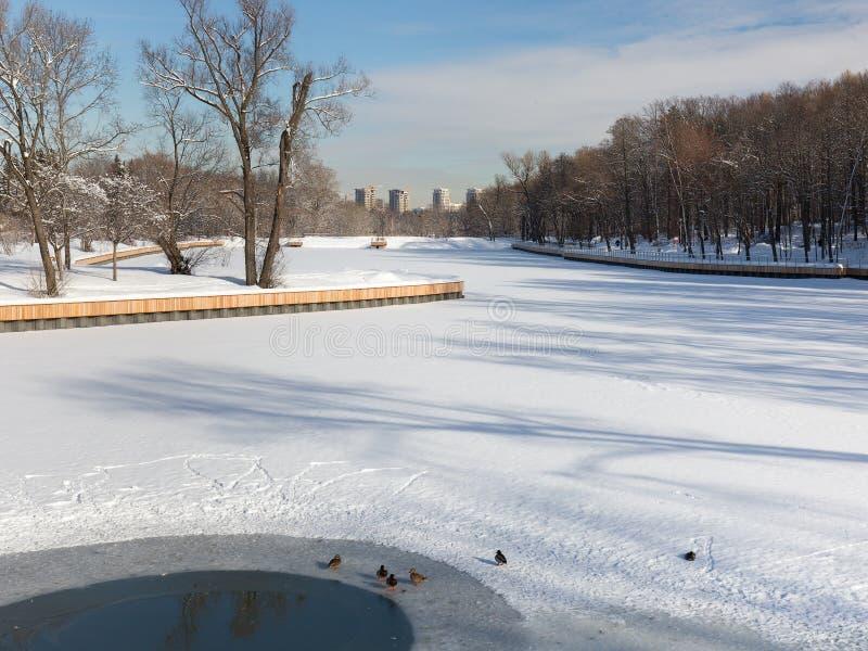 Vista di nuove costruzioni dal giardino botanico di Mosca Anatre che si siedono sullo stagno del ghiaccio Inverno immagini stock