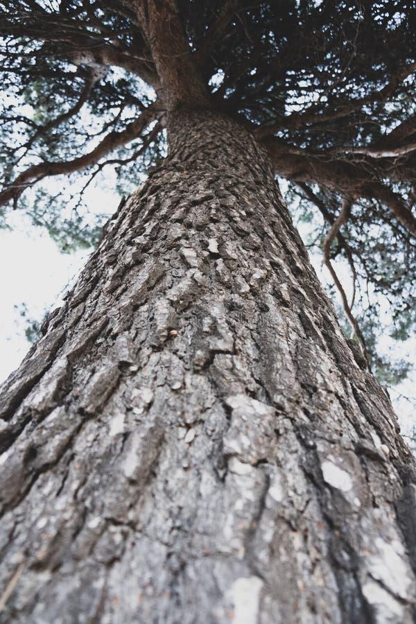 Vista di prospettiva del tronco di albero da sotto fotografia stock libera da diritti