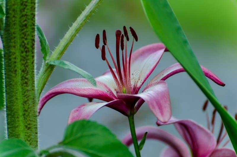 Vista di rosso e mentre floricultura in un giardino verde fotografia stock