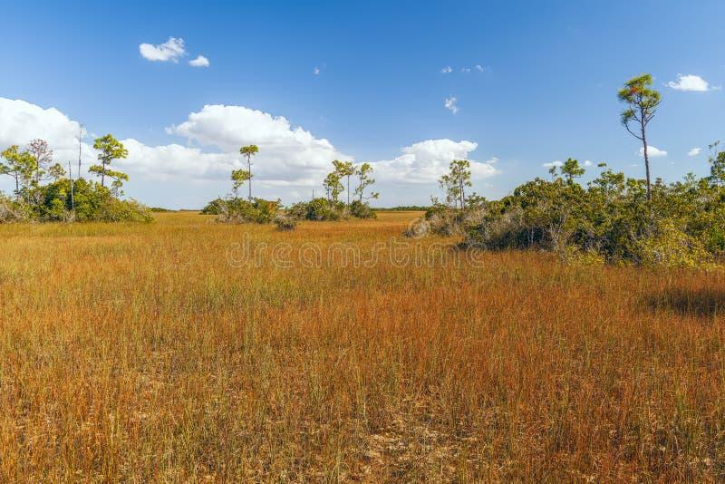 Vista di Taylor Slough da Anhinga Trail Boardwalk nel parco nazionale Everglades Florida USA fotografia stock libera da diritti