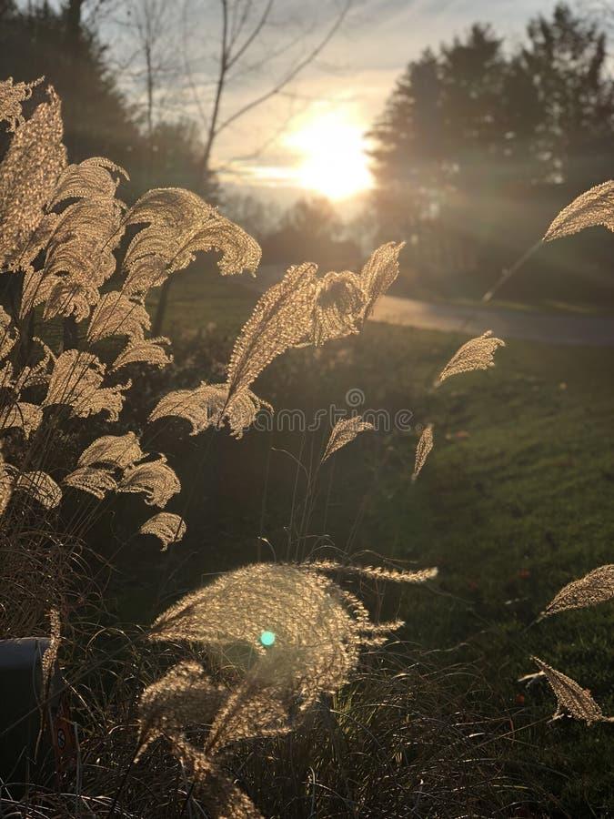 Vista di tramonto attraverso le erbe fotografie stock libere da diritti