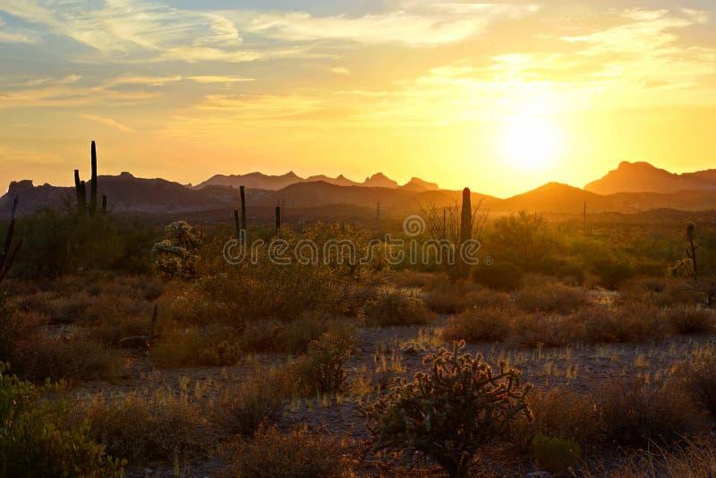 Vista di tramonto del deserto dell'Arizona con i cactus e le montagne fotografia stock