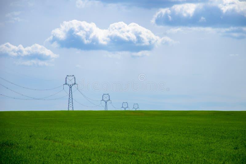 Vista di un campo verde di giovane grano con un palo di potere sotto un cielo blu immagini stock libere da diritti