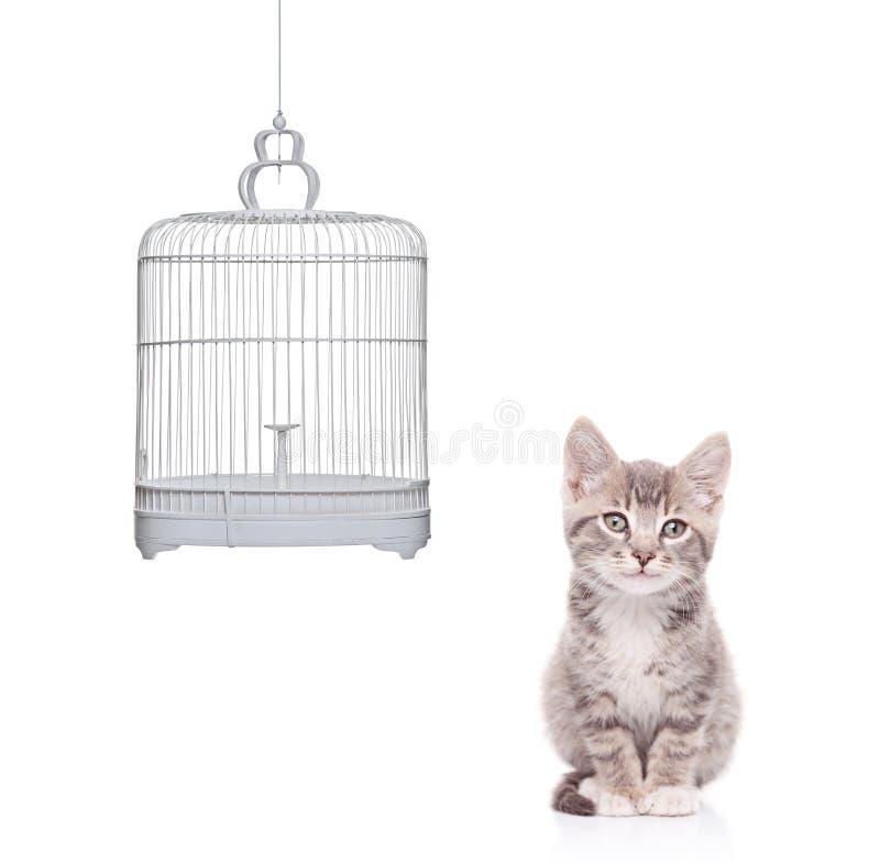 Vista di un gatto e di una gabbia di uccello vuota fotografia stock libera da diritti