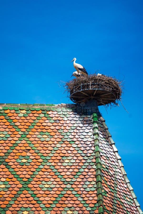 Vista di un nido con le cicogne, simbolo della città storica di Colmar, anche conosciuta come poca Venezia, Colmar, l'Alsazia fotografie stock