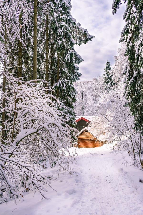 Vista di una cabina di legno della montagna nella foresta della montagna, Medvednica, Zagabria, Croazia fotografia stock libera da diritti