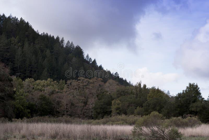 Vista di una catena montuosa con cielo nuvoloso da una pista di escursionismo nel Parco dello Stato di Sugarloaf Ridge, contea di fotografia stock libera da diritti