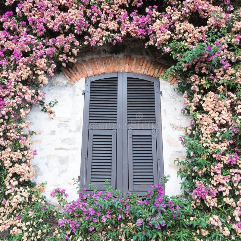 Vista di una finestra verde caratteristica chiusa al aroun delle piante immagini stock libere da diritti