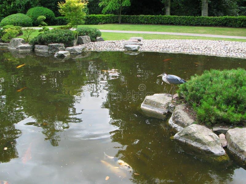 Vista di uno stagno sereno nel giardino di Kyoto in Holland Park a Londra, Regno Unito immagini stock