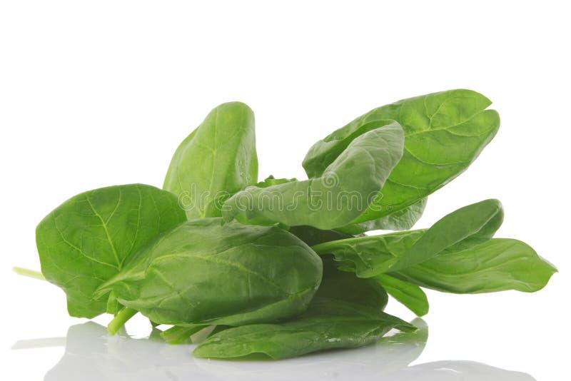 Vista dianteira do espinafre fresco, alimento do vegetariano fotografia de stock