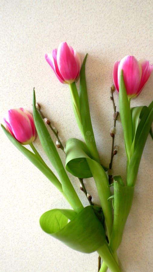 A vista dianteira isolou flores da tulipa em um fundo branco fotos de stock