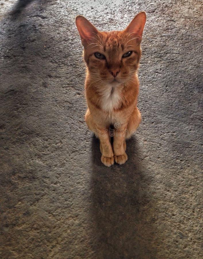 Vista do animal de animal de estimação do gato fotos de stock royalty free