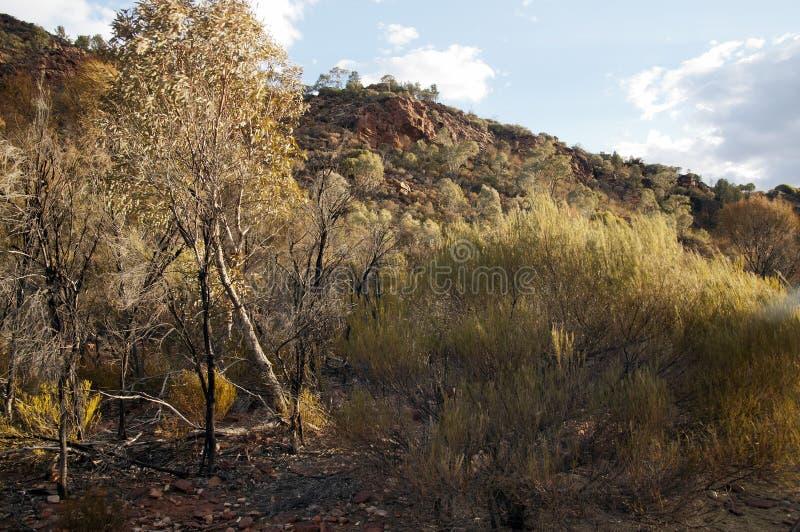 Vista do arbusto e da escarpa australianos na luz solar do fim da tarde foto de stock royalty free