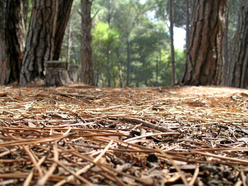 Vista do assoalho da floresta imagem de stock royalty free