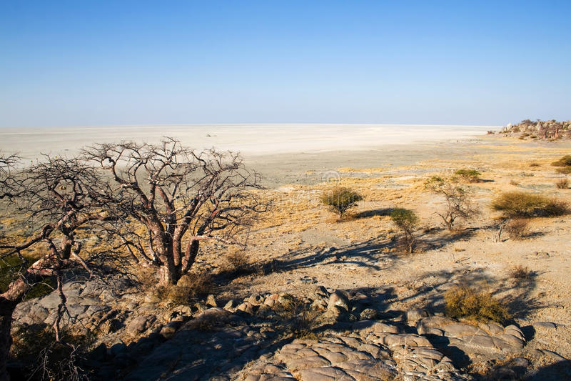 Vista do console de Kubu na área de Makgadikgadi foto de stock