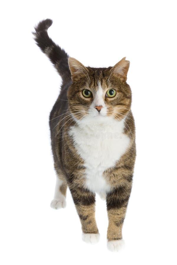 Vista do gato imagens de stock
