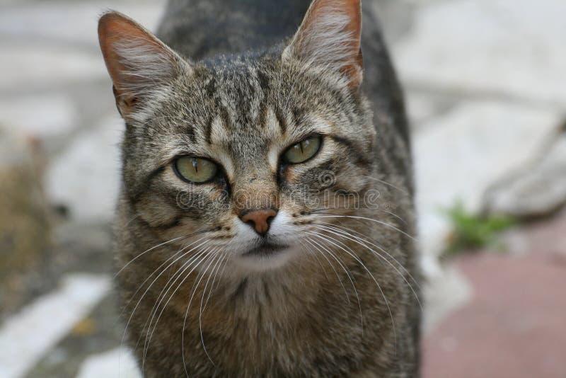 Vista do gato fotografia de stock