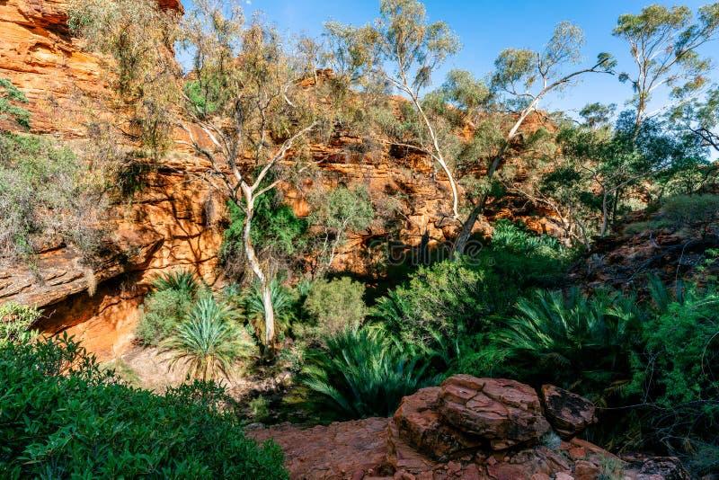 Vista do Jardim do Éden com lote de árvores verdes em reis áridos Garganta no interior Austrália imagens de stock royalty free