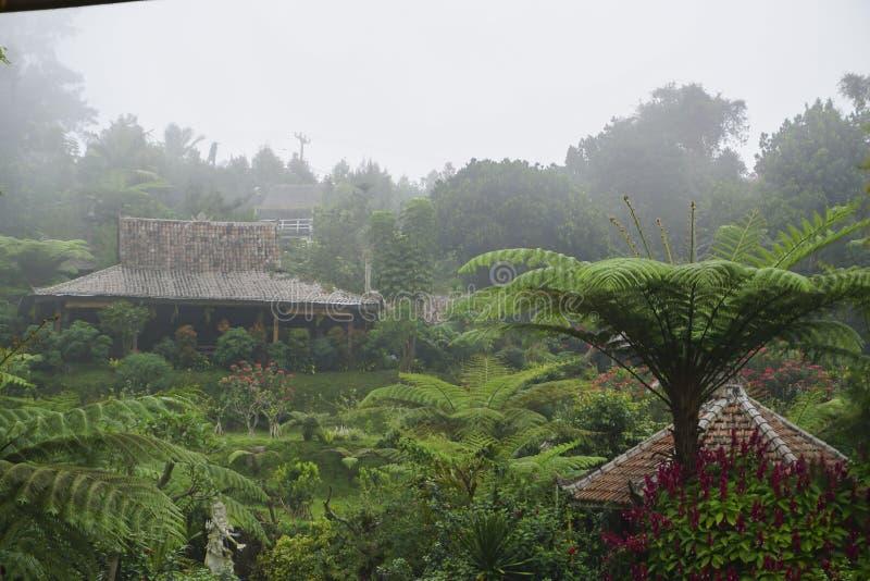 Vista do jardim verde em Bali fotografia de stock