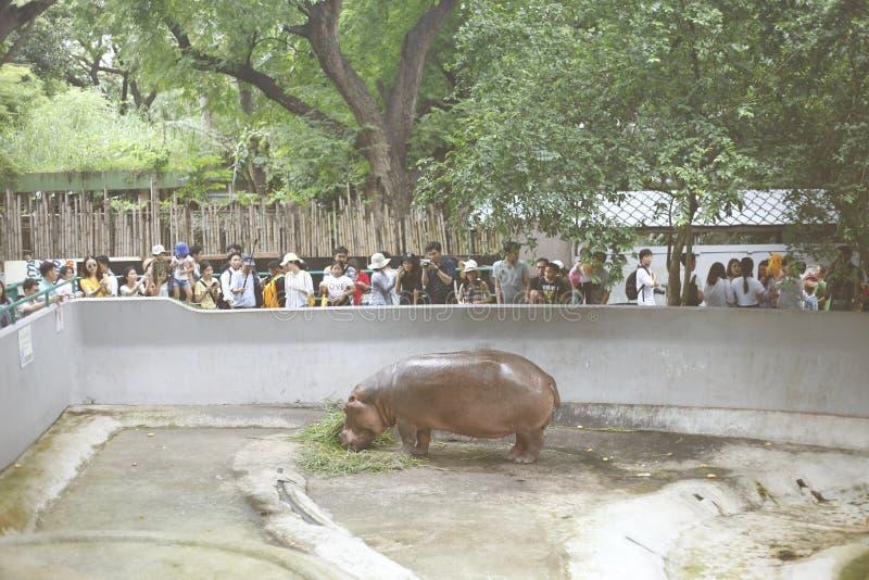 Vista do jardim zoológico de Dusit do hipopótamo, imagem de stock