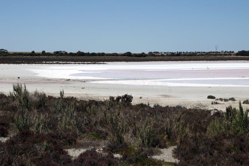 Vista do lago de sal cor-de-rosa com saltbush no primeiro plano imagens de stock