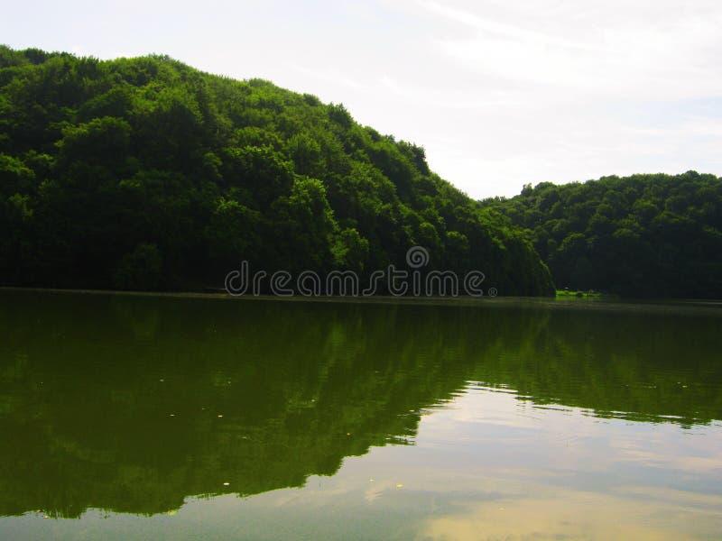 Vista do lago e da floresta verde imagem de stock