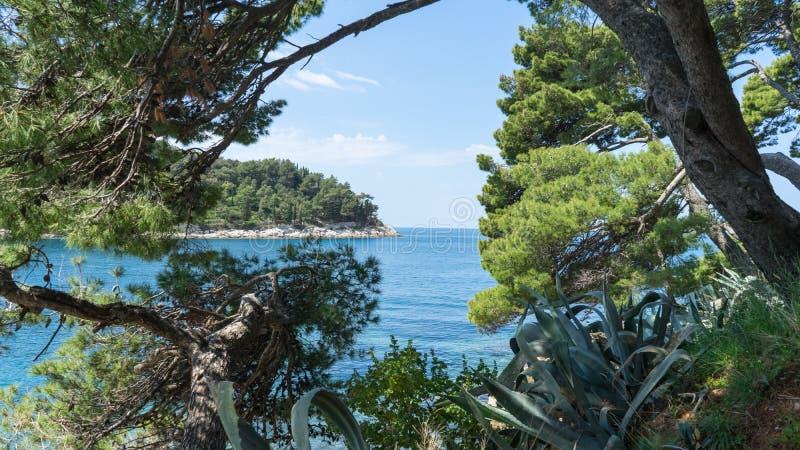 Vista do mar de adriático por um quadro da árvore como a janela aberta à costa azul do mar e do horizonte e da surpresa em croati foto de stock royalty free