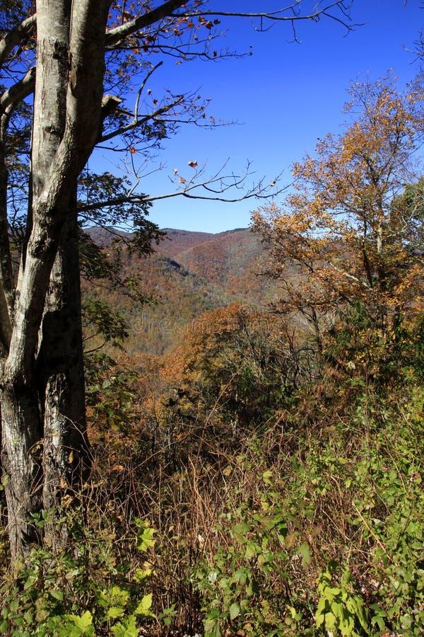 A vista do moinho do martelamento negligencia em North Carolina imagem de stock