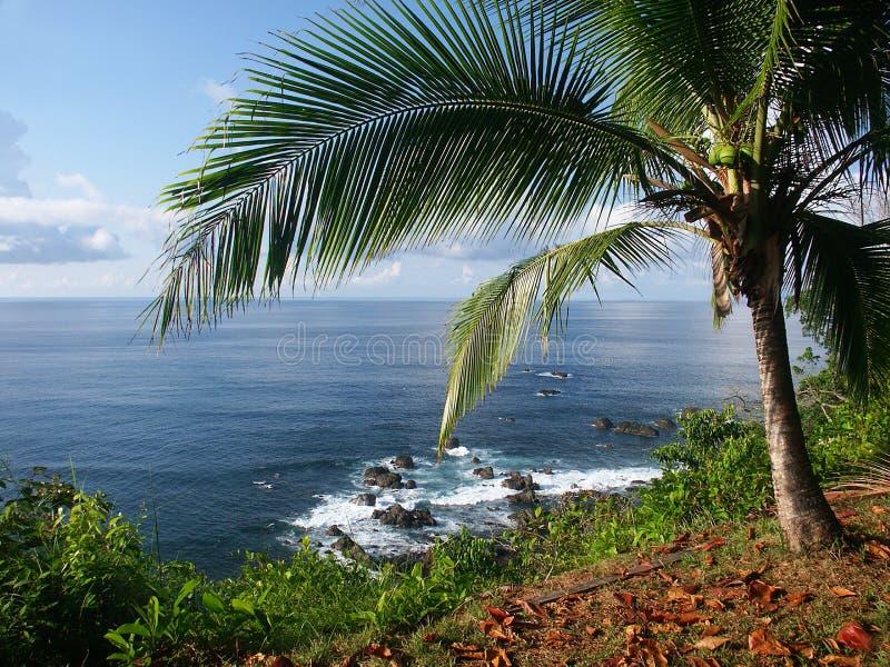 Vista Do Oceano Com Palmtree Imagem de Stock Royalty Free