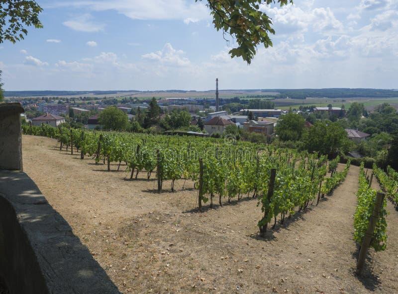 Vista do parque do castelo com no vinhedo e o Benatky nad Jizerou, República Checa fotos de stock