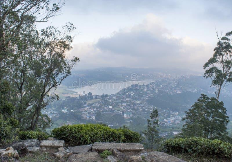 Vista do pico do único monte da árvore fotos de stock