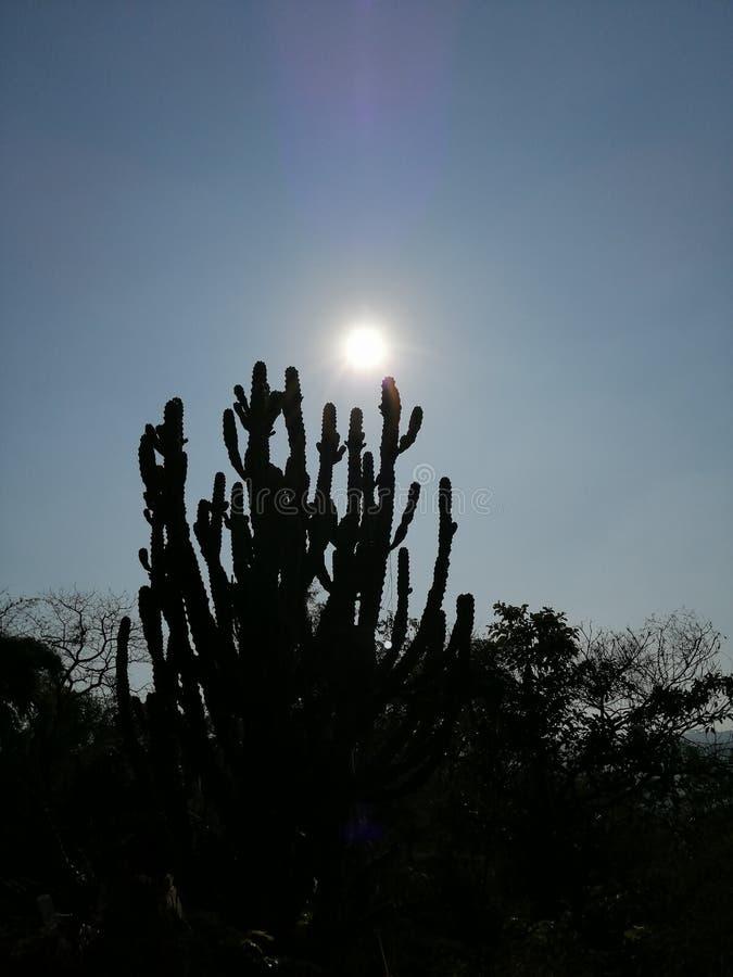 Vista do sol no fundo dos azul-céu fotografia de stock royalty free