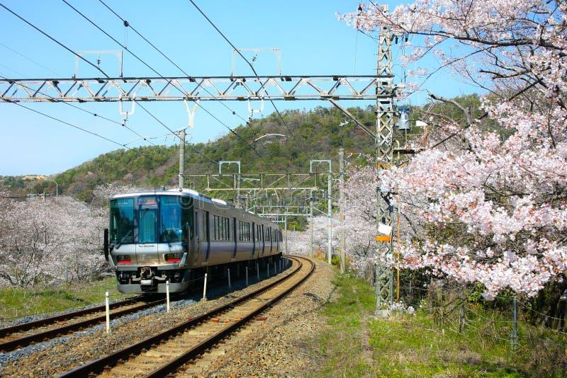 A vista do trem local de Wakayama que viaja em caminhos de ferro com floresce imagem de stock