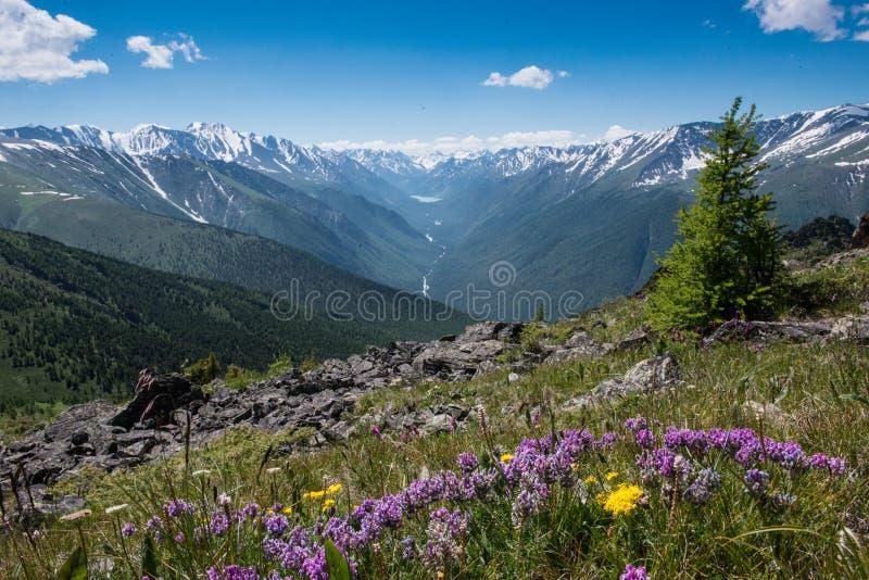 A vista do vale da montanha nas montanhas de Altai na distância é o kucherlinskoe do lago foto de stock royalty free