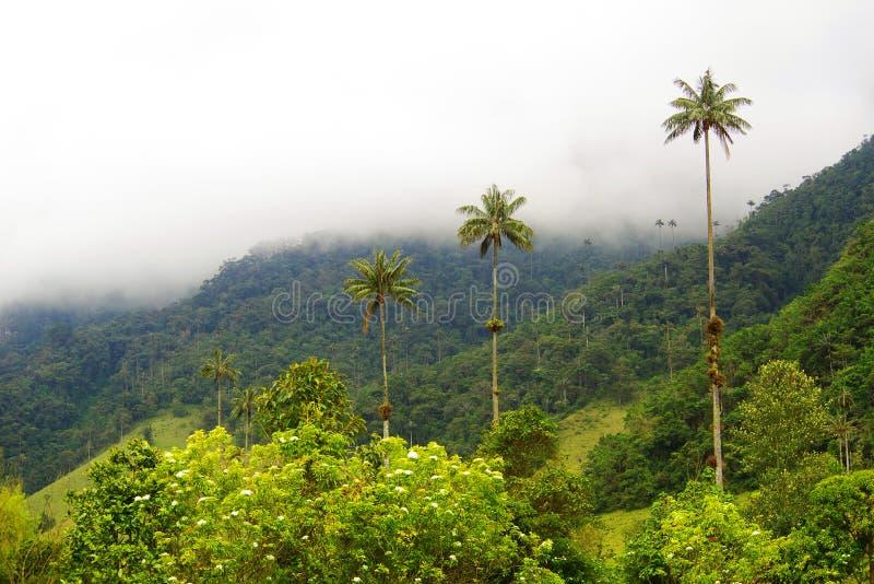 Vista do vale de Cocora em Salento, Colômbia fotografia de stock