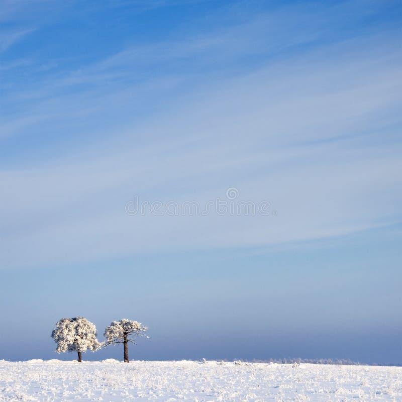 Vista do vidoeiro no dia ensolarado do inverno imagens de stock
