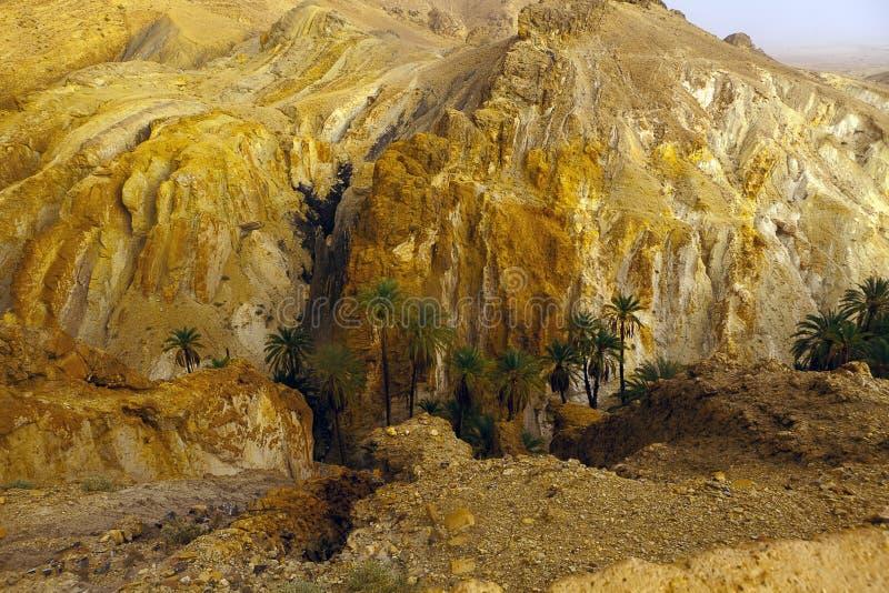 Vista dos oásis Shebika Tunísia da cachoeira horizontal fotos de stock royalty free