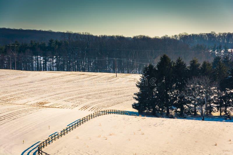 Vista dos pinheiros em um campo de exploração agrícola coberto de neve em York rural Co foto de stock