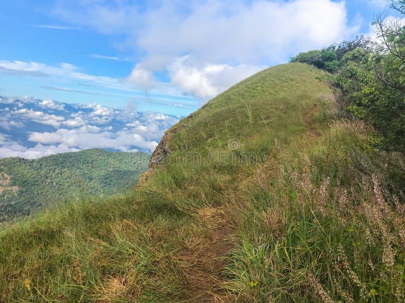 Vista e grama verde sobre a montanha no MAI de Chaing, Tailândia do jong de segunda-feira fotos de stock
