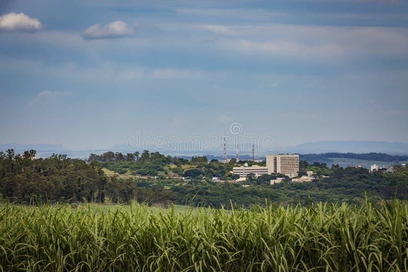 Vista edificio di Ribeirao Preto e giacimento della canna da zucchero fotografia stock libera da diritti