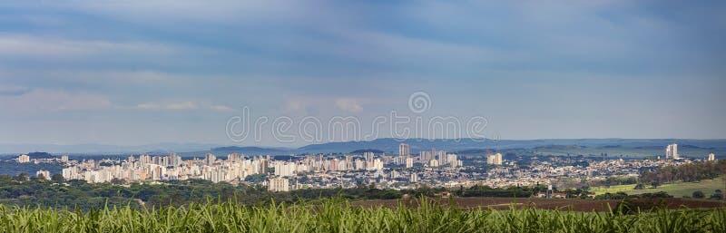 Vista edificio di Ribeirao Preto e giacimento della canna da zucchero immagini stock