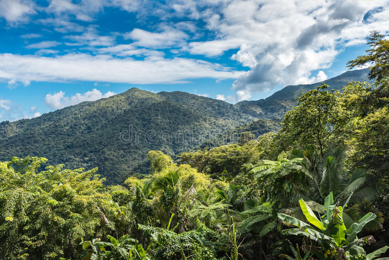 Vista of the El Yunque rainforest with tropical vegetation and m. Ountains captured on the drive through the forest stock images