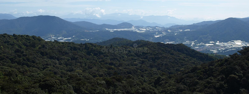 Vista em Cameron Highlands fotos de stock royalty free