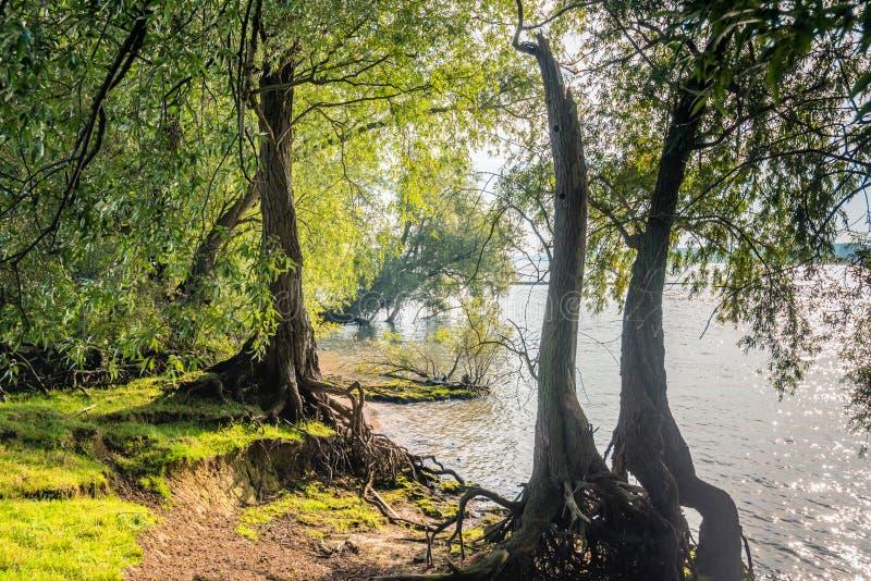 Vista entre árvores de salgueiro ao longo do rio foto de stock