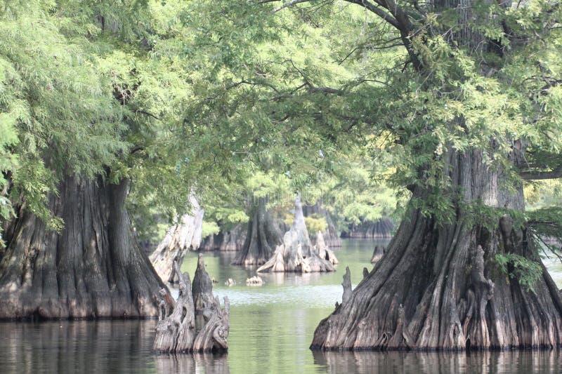Vista entre as árvores de cipreste fotos de stock royalty free
