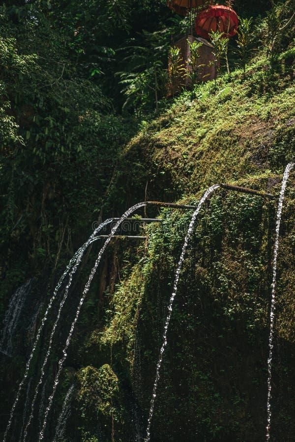 vista escénica de la agua corriente y de las plantas verdes en ubud, foto de archivo libre de regalías