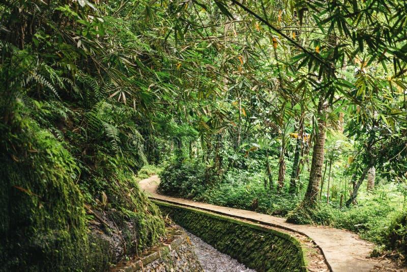 vista escénica de la corriente en bosque verde en ubud, fotografía de archivo