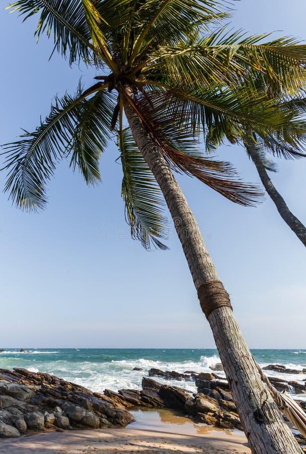 vista escénica de olas oceánicas y de palmeras en la costa costa, Sri Lanka, mirissa fotos de archivo
