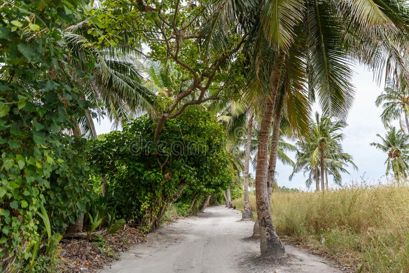 vista escénica de palmeras a lo largo de la trayectoria vacía, foto de archivo