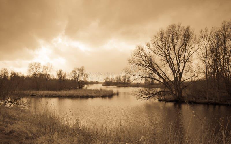 Vista escénica de una reserva de naturaleza holandesa foto de archivo